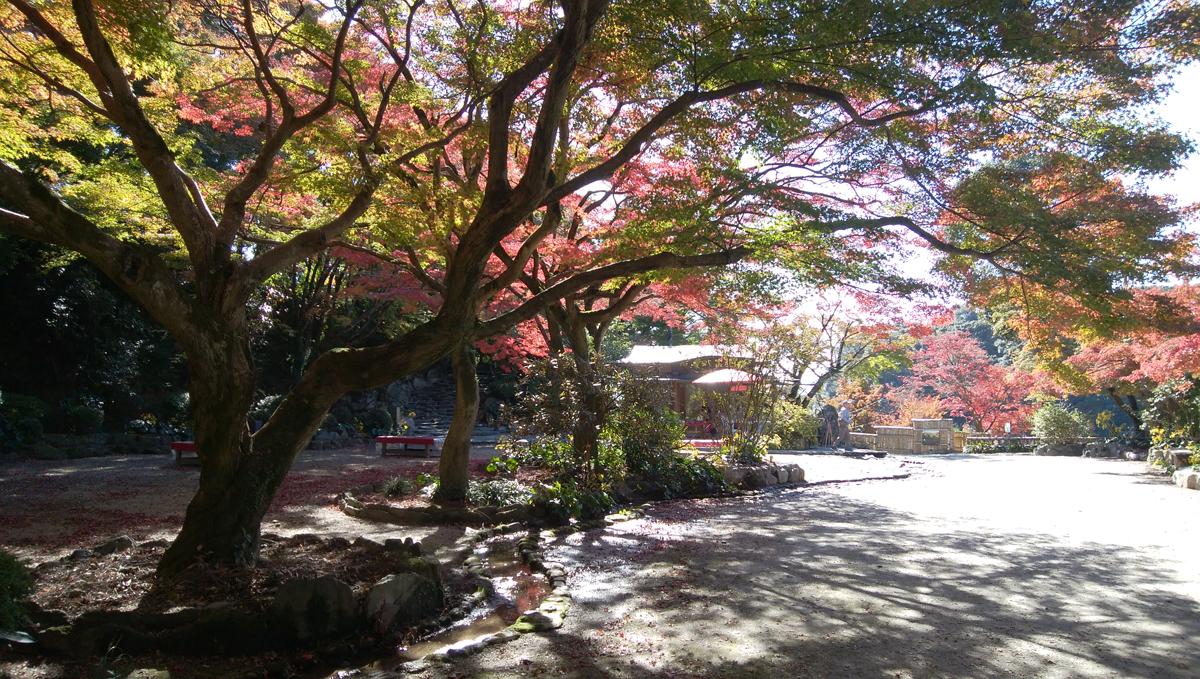 十可苑 2019年11月 紅葉を楽しむ もみじ広場