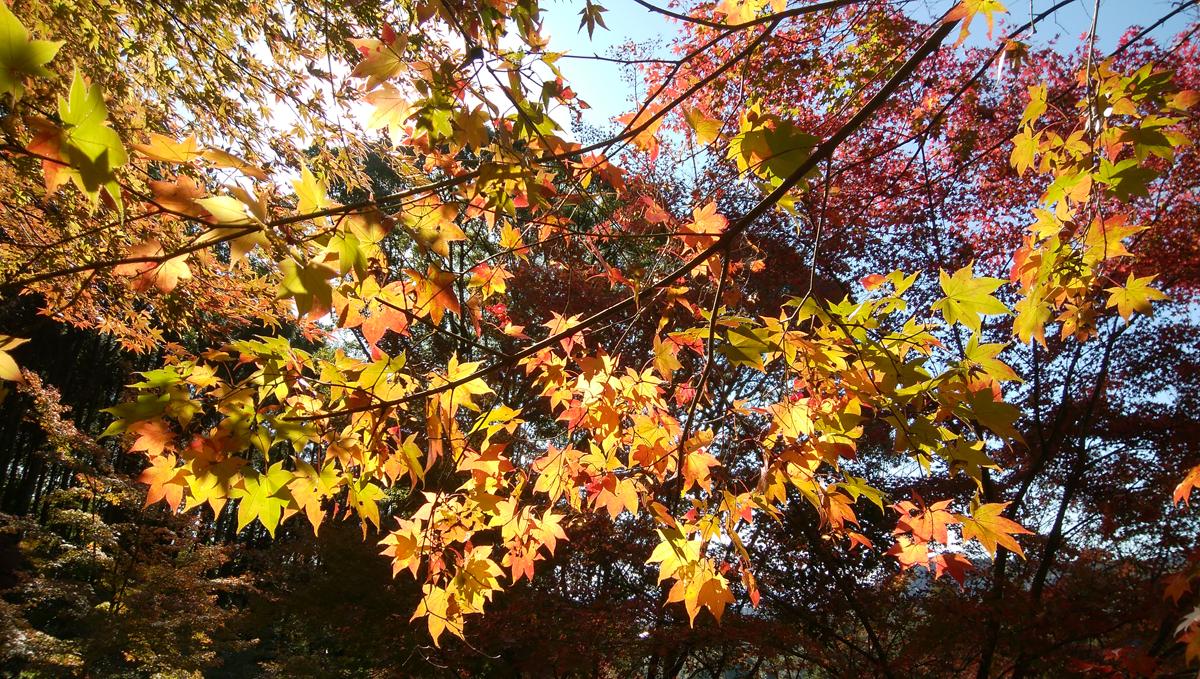 十可苑 2019年11月 紅葉を楽しむ もみじ谷