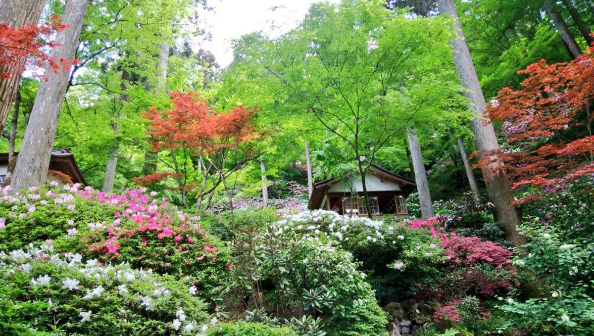 大興善寺 つつじの名所 お抹茶処からの風景