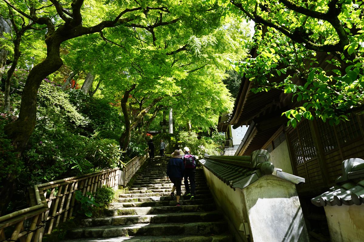 大興善寺 契園入口後の階段